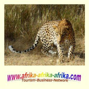 Afrika-Afrika-Afrika